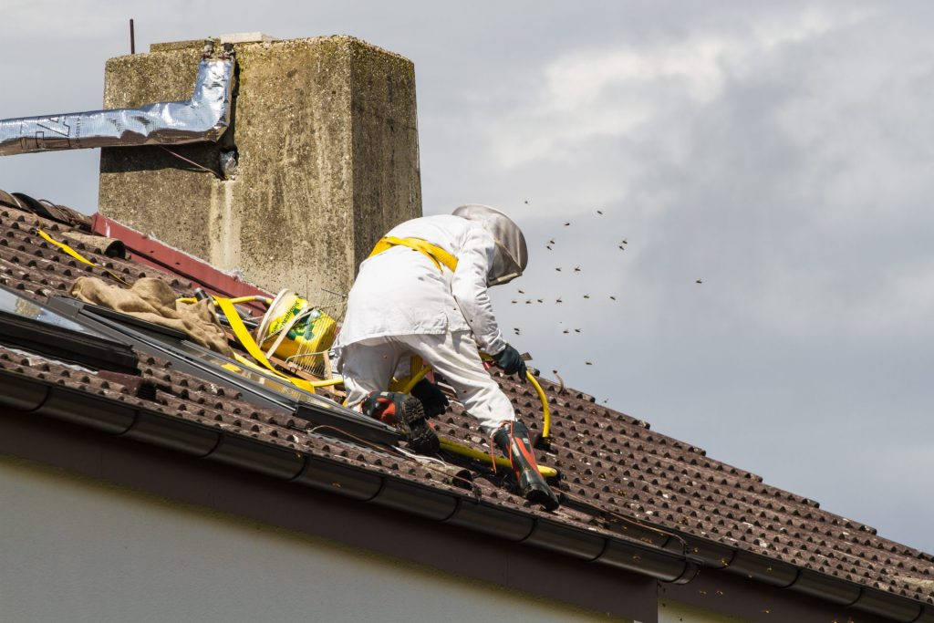 Man removing bees swarm from the roof of a home